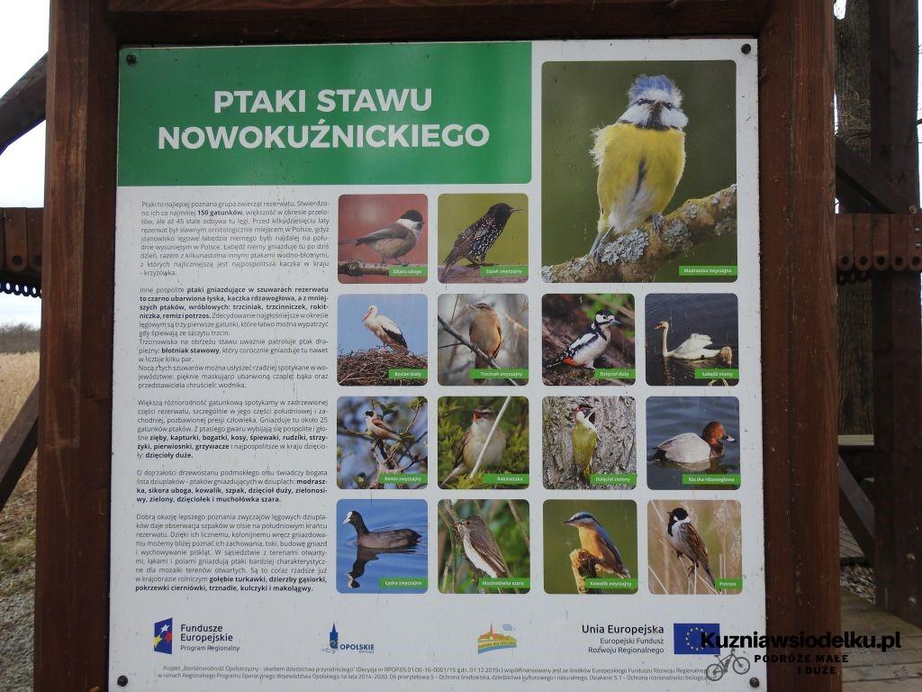 Kuznia-w-siodelku-Rezerwat-Przyrody-Staw-Nowokuznicki-14