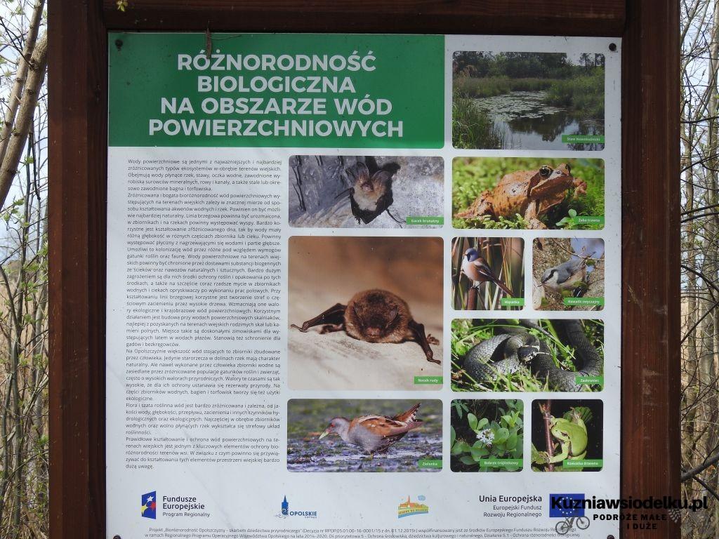 Kuznia-w-siodelku-Rezerwat-Przyrody-Staw-Nowokuznicki-2