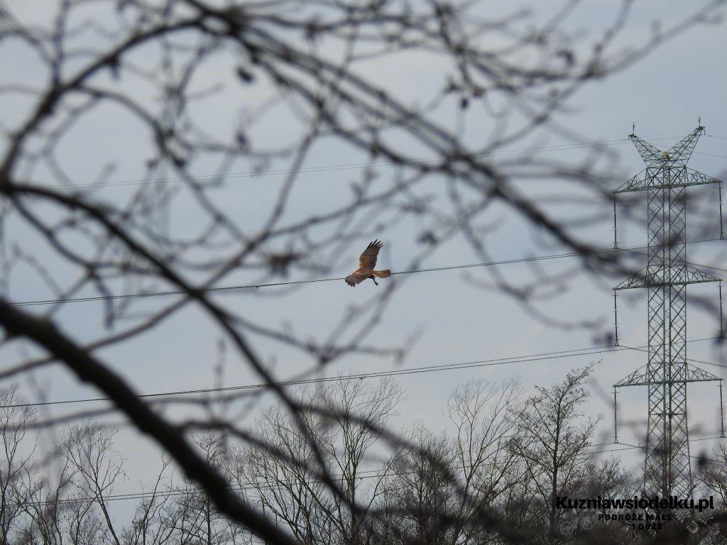 Kuznia-w-siodelku-Rezerwat-Przyrody-Staw-Nowokuznicki-22