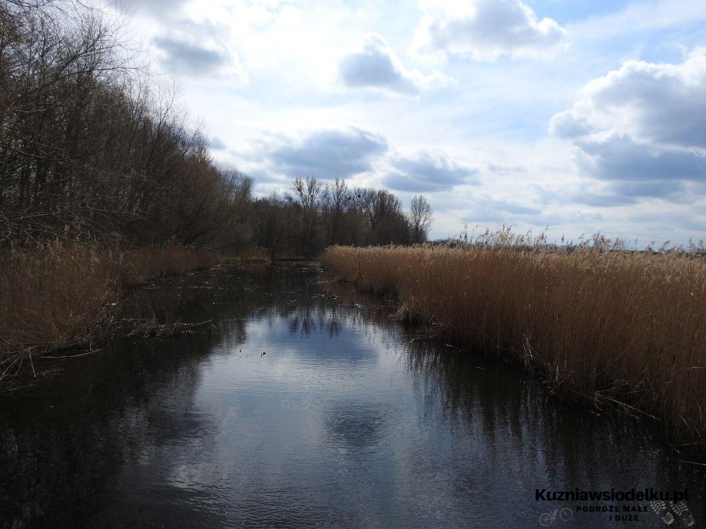 Kuznia-w-siodelku-Rezerwat-Przyrody-Staw-Nowokuznicki-9
