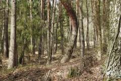 Kuznia-w-Siodelku-Spacer-do-Stawu-Sangow-10