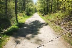 Kuznia-w-Siodelku-Trasa-rowerowa-Strzelinskie-Single-Tracki-3