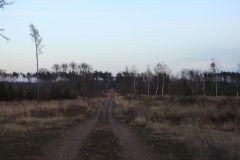 Kuznia-w-Siodelku-Las-po-wichurze-11
