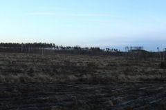 Kuznia-w-Siodelku-Las-po-wichurze-9