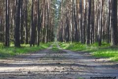 Kuznia-w-Siodelku-Wydmy-Kosorowice-z-Chylka-10