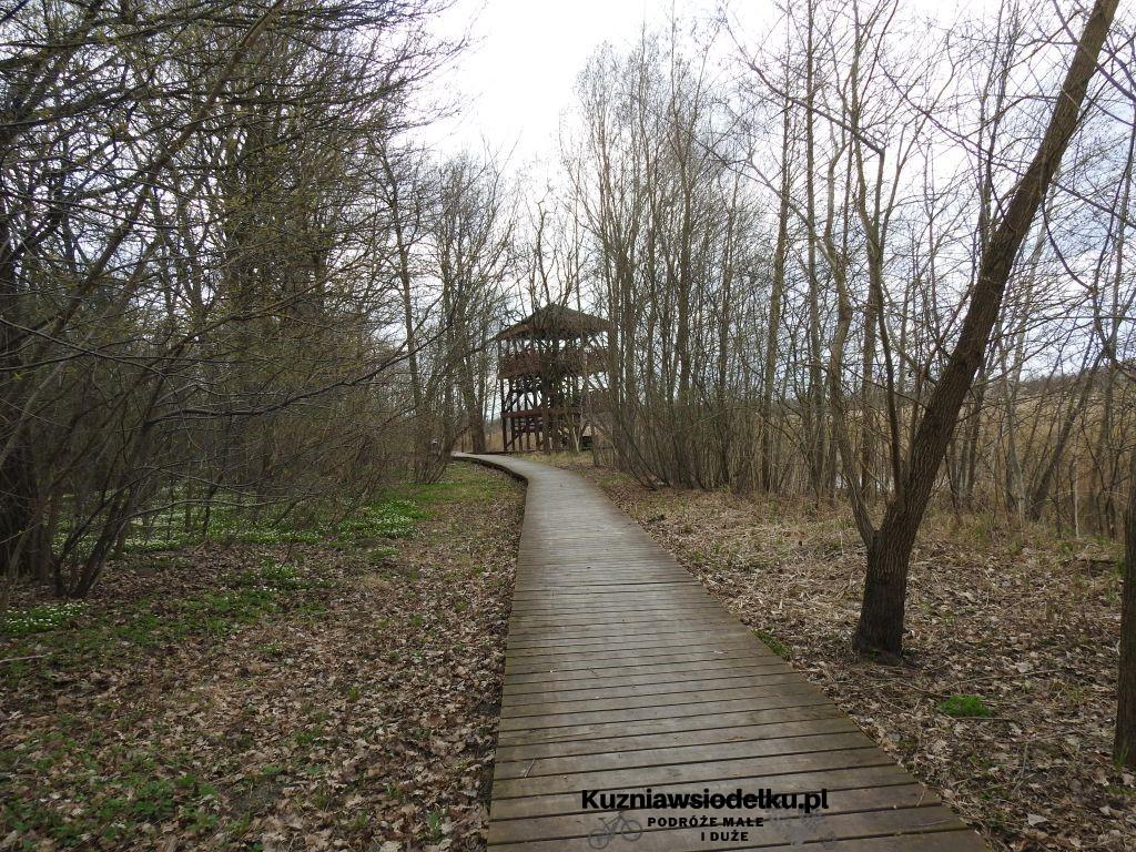 Rezerwat przyrody Staw Nowokuźnicki