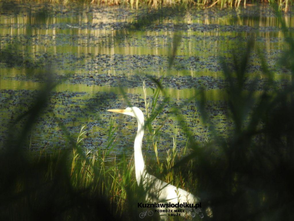 Kosorowickie jeziorka