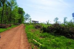 Kuznia w Siodelku - Zniszczony las 1
