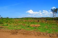 Kuznia w Siodelku - Zniszczony las 2