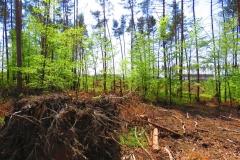 Kuznia w Siodelku - Zniszczony las 3