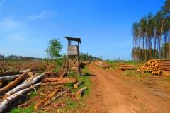 Kuznia w Siodelku - Zniszczony las 4
