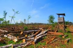 Kuznia w Siodelku - Zniszczony las 5