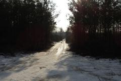 Kuznia w Siodelku - Las 3