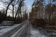 Kuznia w Siodelku - Las 9