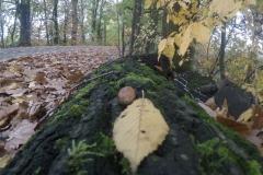 Kuznia w Siodelku - Lezczok Pazdziernik 8