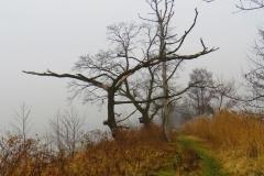 Kuznia w Siodelku - Lezczok styczen 9