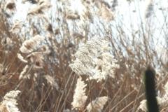 Kuznia w Siodelku - Lezczok Luty 12