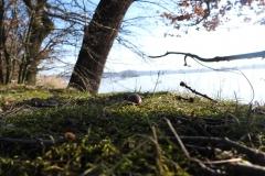 Kuznia w Siodelku - Lezczok Luty 18