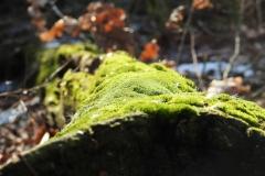 Kuznia w Siodelku - Lezczok Luty 19