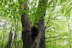 Kuznia-w-Siodelku-Rezerwat-Lezczok-Kwiecien-13