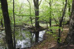 Kuznia-w-Siodelku-Rezerwat-Lezczok-Kwiecien-17