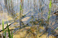 Kuznia-w-Siodelku-Rezerwat-Lezczok-Kwiecien-3