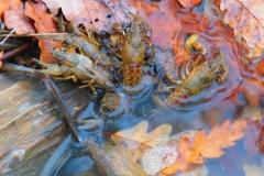 Kuznia w Siodelku - Lezczok Listopad 4