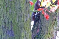 Kuznia w Siodelku - Lezczok Listopad 8