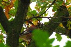 Kuznia w Siodelku - Pazdziernik Lezczok 14