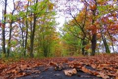 Kuznia w Siodelku - Pazdziernik Lezczok 7