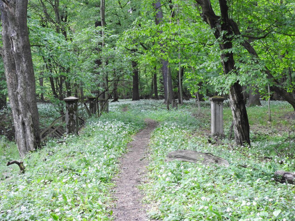 Kuznia-w-Siodelku-Rezerwat-Lezczok-Droga-Na-Mostek-5