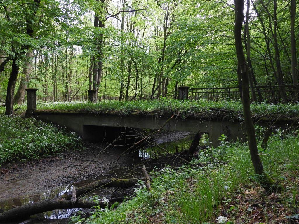 Kuznia-w-Siodelku-Rezerwat-Lezczok-Droga-Na-Mostek-6