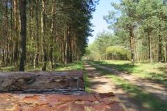 Kuznia W Siodelku - Petla wokol Dziergowic 2