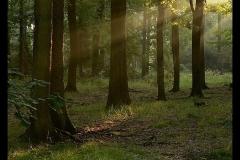 Kuznia-w-siodelku-plenery-Dabrowa-treny-Lesnictwa-Nsdza