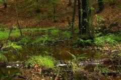 Kuznia-w-siodelku-plenery-Na-tym-terenie-stwierdzono-344-gatunki-roslin-w-tym-13-gatunkow-bardzo-rzadkich-i-zagrozonych.