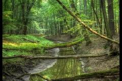 Kuznia-w-siodelku-plenery-Rezerwat-Przyrody-Lezczok