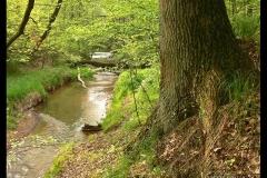 Kuznia-w-siodelku-plenery-Rzeka-Sumina-1