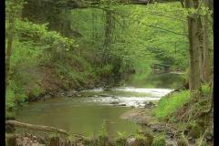 Kuznia-w-siodelku-plenery-Rzeka-Sumina-2
