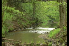 Kuznia-w-siodelku-plenery-Rzeka-Sumina2