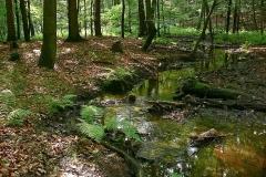 Kuznia-w-siodelku-plenery-Uroczysko-Glebokie-Doly-to-jedno-z-piekniejszych-miejsc-nie-tylko-na-terenie-Nadlesnictwa-Rybnik-ale-takze-na-Slasku.
