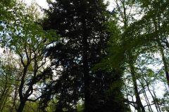 Kuznia-w-Siodelku-Rudzki-Park-9