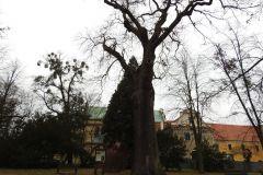 Kuznia-w-siodelku-Park-Cysterski-9