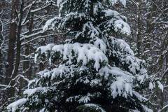 Kuźnia w siodełku zima 2017-33