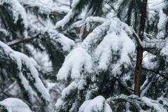 Kuźnia w siodełku zima 2017-38