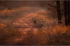 Kuznia-w-siodelku-zwierzeta-Mlody-cielak