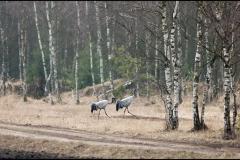 Kuznia-w-siodelku-zwierzeta-Zurawie-1