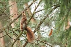 Kuznia-w-siodelku-zwierzeta-wiewiorka